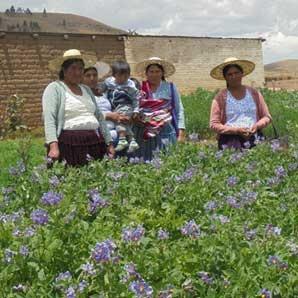 CIPCA Cochabamba