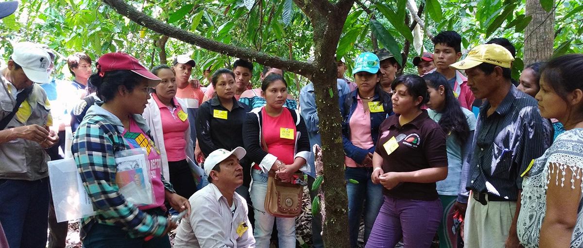 Productores de cacao de la Amazonía Sur fortalecen sus capacidades en taller especializado de injerto
