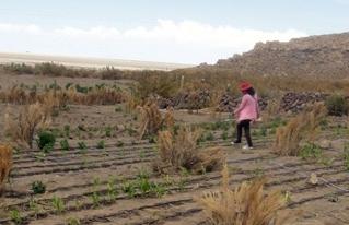 CIPCA implementa sistemas de riego por goteo para optimizar uso del agua en Altiplano Sur