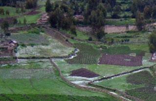 Productores de Bolivia, Perú y Francia compartieron propuestas alternativas de desarrollo económico productivo