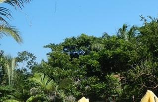 Fue aprobada la Ley de Cacao Silvestre de Baures