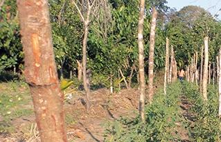 Comunidades de San Andrés implementan horticultura agroecológica para su seguridad alimentaria