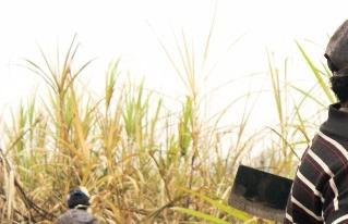 Trabajadores zafreros de la caña de azúcar declaran estado  de emergencia en Bermejo