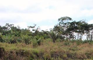 Río Chico desarrolla la producción piscícola para su seguridad alimentaria y la generación de ingresos