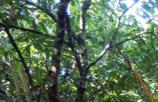 Indígenas y campesinos de la Amazonía sur se capacitan en manejo integral de sistemas agroforestales