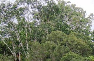 CIPCA reflexionará sobre medio ambiente y agroecología en el VIII Foro Social Panamazónico