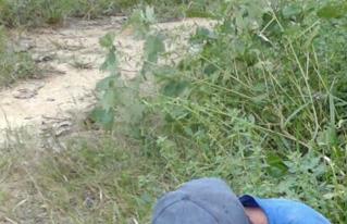 Organizaciones campesinas de Pando en emergencia por baja producción de castaña