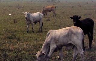 Más de 640.000 hectáreas quemadas en el departamento del Beni mientras se debate la modificación del PLUS