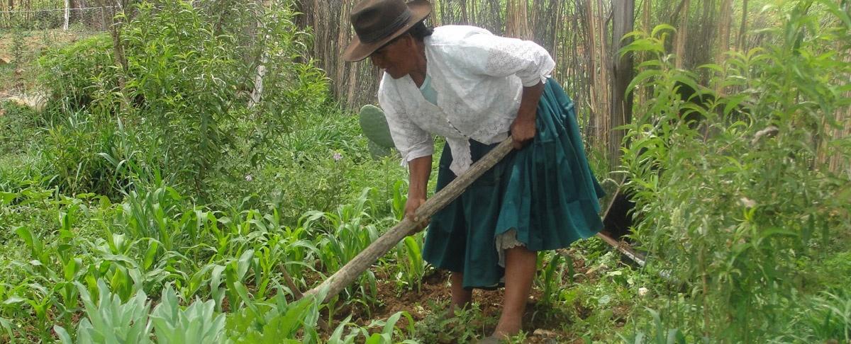El proceso de cambio no ha llegado a los pequeños productores