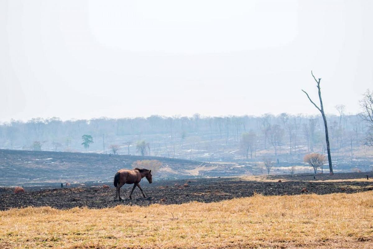 Incendios en Bolivia: decisiones, responsabilidades y propuestas