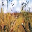 Diálogos y propuestas sobre el mundo rural