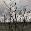 Tiempos difíciles para Ñembi Guasu, el Gran Refugio y nueva área de conservación