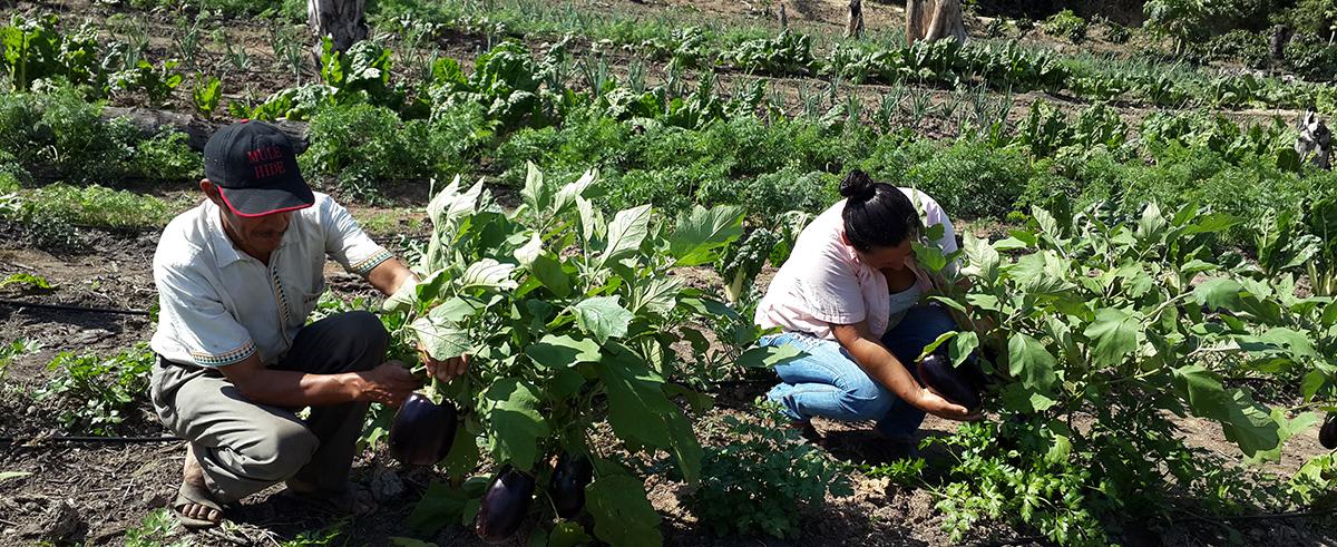 Expertos: Es la gran oportunidad para expandir la producción interna y externa de la agricultura familiar campesina