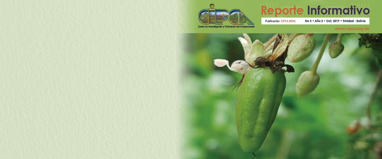 Bolivia productor exportador de Cacao fino y de aroma
