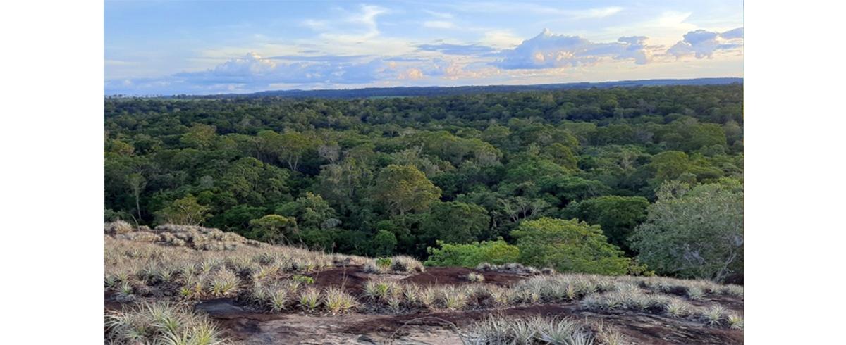 Presentan estudio para aportar al establecimiento de criterios eco sistémicos para la recuperación y el enriquecimiento del Bosque Seco Chiquitano
