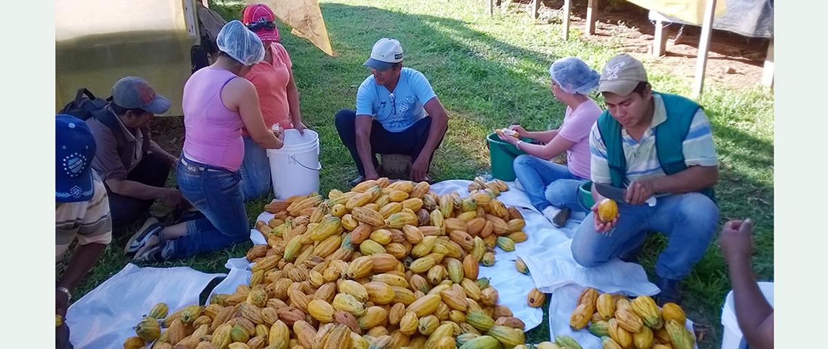 Plan de reactivación agropecuaria del MDRyT plantea recortar presupuesto al recientemente reformulado Programa Nacional del Cacao, entre otros