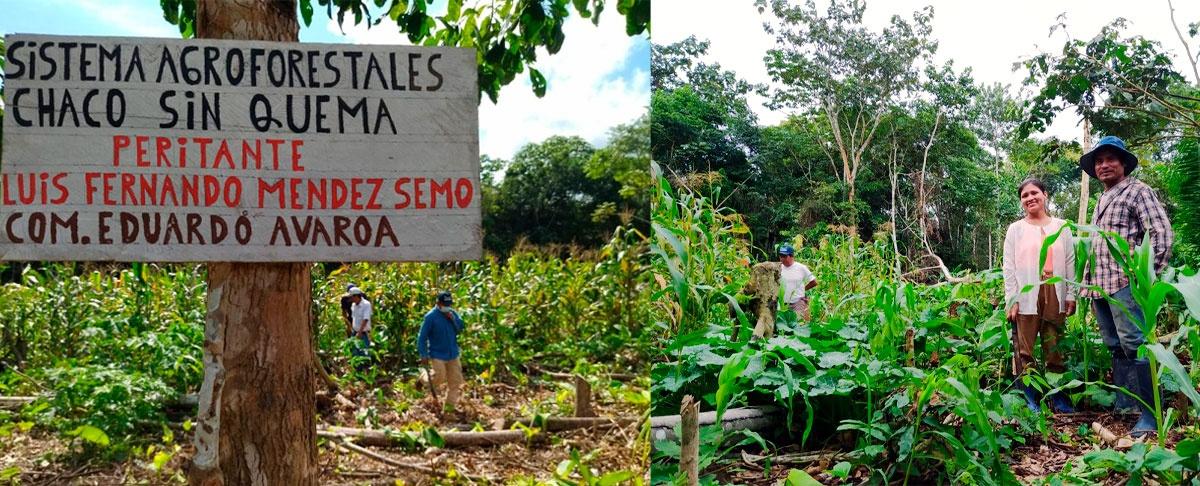 Peritantes de la Amazonía sur socializan los primeros resultados de su experiencia en Agroforesteria Dinámica