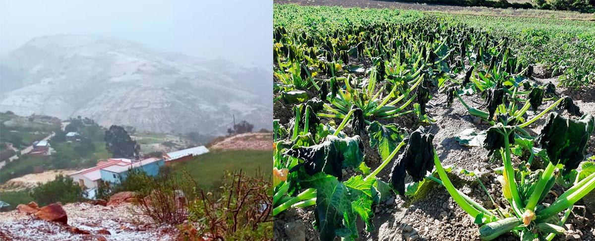 Fenómenos climáticos afectan la producción agrícola en los municipios de Pojo y Acasio