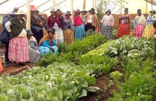 Asociaciones productivas del altiplano intercambiaron experiencias sobre manejo de carpas solares y producción de hortalizas