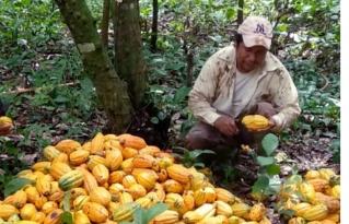 El Beni cuenta con una nueva Ley Departamental del Cacao Nativo Amazónico