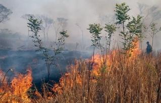 Mesa Técnica Permanente por los Bosques de Santa Cruz se pronuncia ante los desastres y la falta de efectividad en la lucha contra los incendios