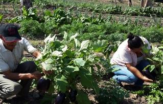 Organizaciones plantean la revalorización y fortalecimiento de la Agricultura Familiar