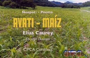 """Video """"Avati-Maíz"""" motiva a la protección del maíz"""