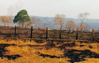 """Tribunal Internacional de Derechos de la Naturaleza establece derogación de normas """"incendiarias"""" respecto al caso de Ecocidio en la Chiquitanía"""