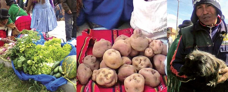 Papas y hortalizas gigantes destacan en la feria de Taraco