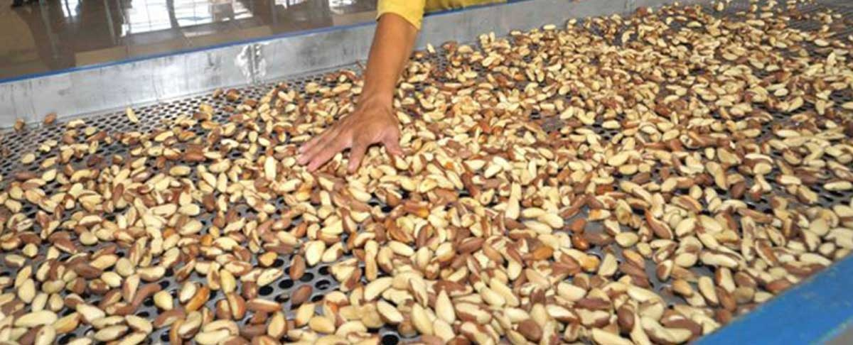 Exportadores creen factible cultivos de soya en noroeste