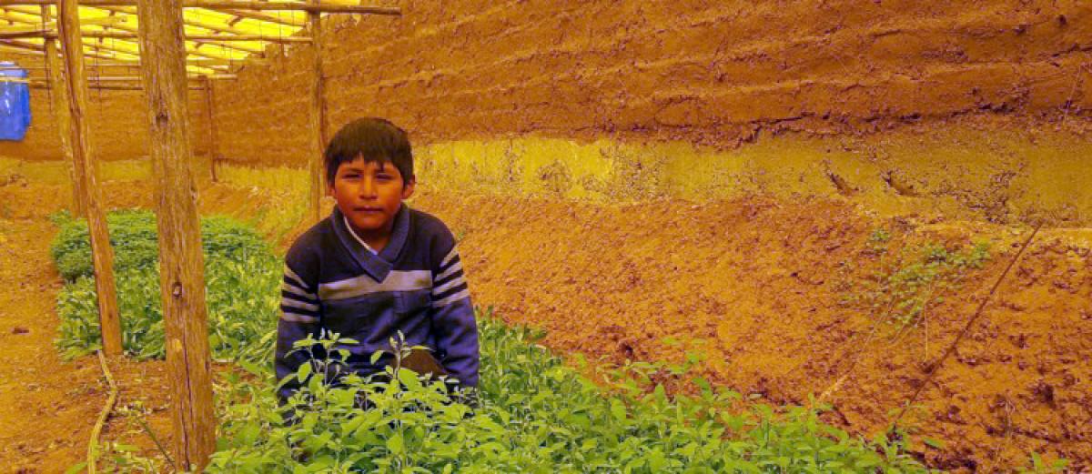 Calamarca: Jóvenes profesionales retornan a sus comunidades y promueven la agroecología