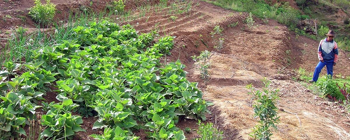 Fortalecer la agricultura familiar para mitigar los impactos del COVID-19