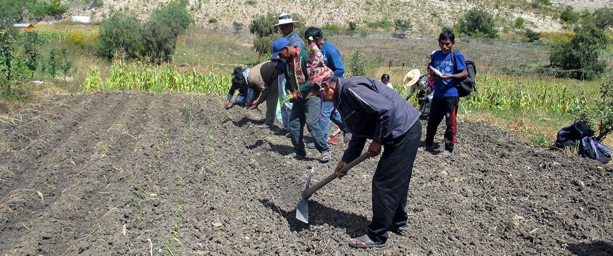 Repensar un modelo de desarrollo rural sostenible desde la agricultura familiar en tiempos de COVID-19