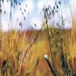 La 'cosecha de agua' cambia la vida en valles quechuas de Cochabamba y Potosí