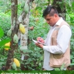 Científicos bolivianos van tras el genoma del cacao amazónico