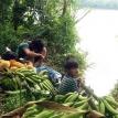 La producción campesino indígena: soporte alimentario y de salud integral en tiempos de coronavirus